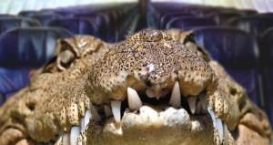 Un-crocodile-dans-un-sac-de-voyage